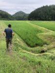 津和野産酒米栽培『山田錦』の様子・おくがの地区